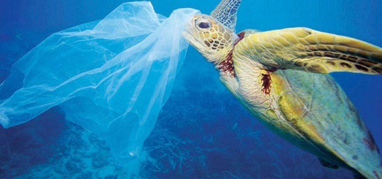 Si vieta la plastica nei lidi in Puglia